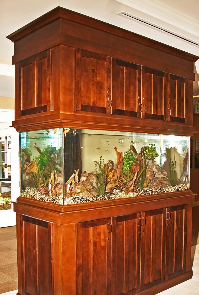 Fish tank in foyer - AltaVita Memory Care Center in Longmont